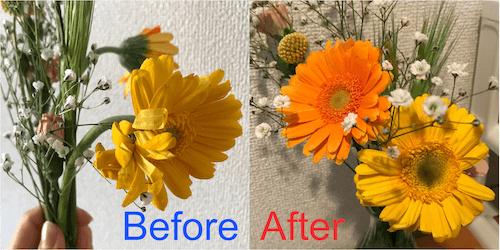 ブルーミーで水揚げをする前後のお花の様子の違い
